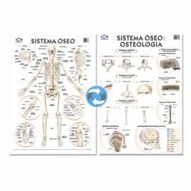 Lam.sist.oseo/osteologia Con Varilla 72x102 Cm.
