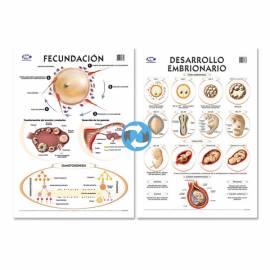 Lam.sist.fecundacion/embrion Con Varilla 72x102 Cm.