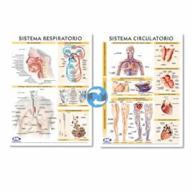 Lam.sist.resp./circulatorio Con Varilla 72x102 Cm.
