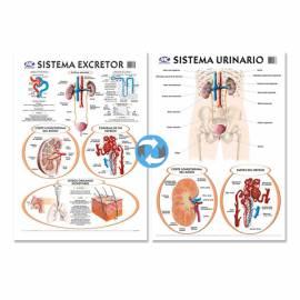 Lam.sist.urinario/excretor Con Varilla 50x70 Cm.