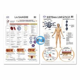 Lam.sist.linfatico/sangre Con Varilla 50x70 Cm.