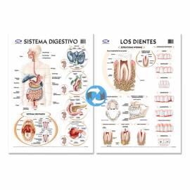 Lam.sist.digestivo/dientes Con Varilla 72x102 Cm.