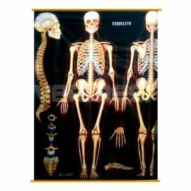 Lam.esqueleto Pizarra